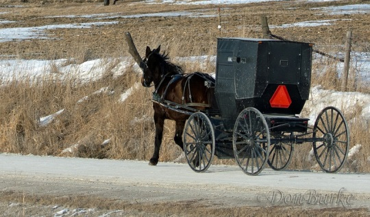 kalona-ia-amish-buggy