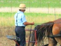 Man with reins of horse team