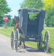 medina ashland amish buggy