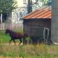 Minnesota Amish Tables