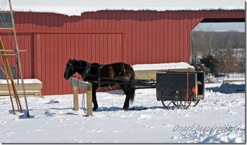 missouri-amish-horse-drawn-transport