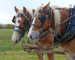 Monte Vista Colorado Amish