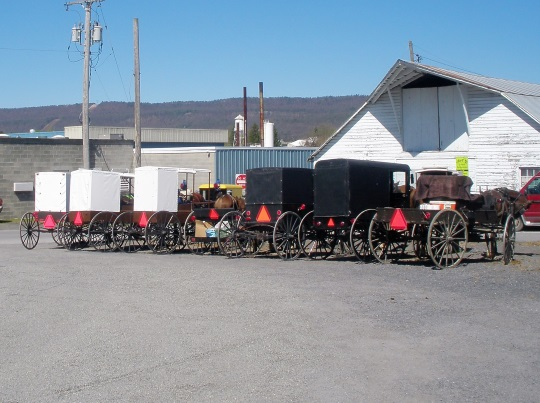 multicolored-buggy-row-belleville-pa