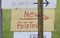 New Potatoes Amish TN