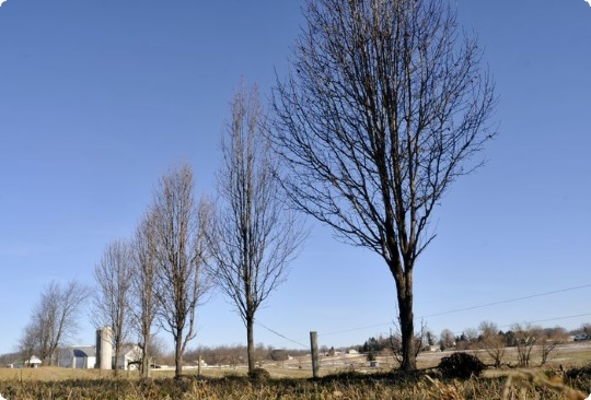 Five Trees Memorialize Nickel Mines Girls