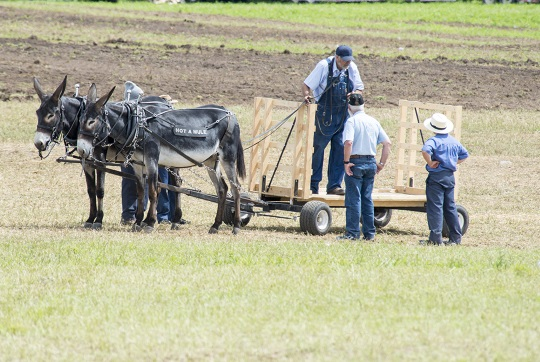 not-a-mule-horse-progress