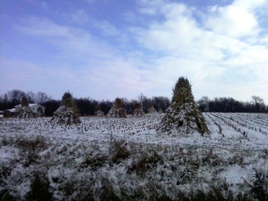 ohio amish snow field