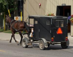 old order mennonite buggy ontario