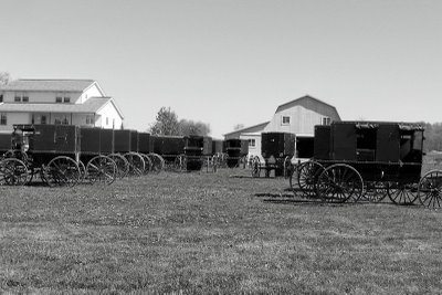 Amish church buggies