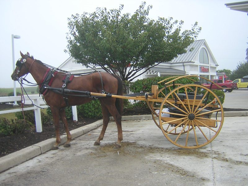 Amish speed carriage