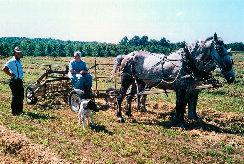 Amish_family,_Lyndenville,_New_York