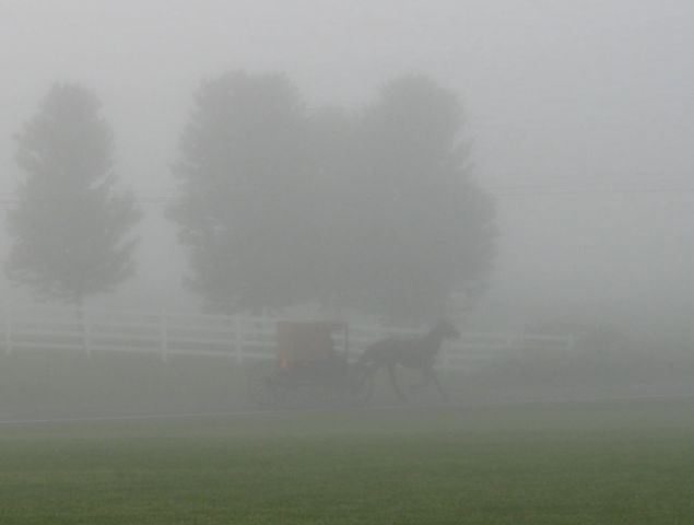Amish buggy fog to auction