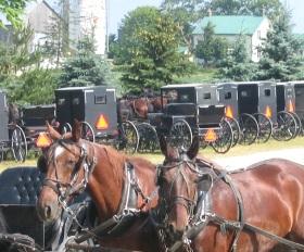 ontario-mennonite-carriage-parking