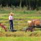 Pennsylvania Amish Tables