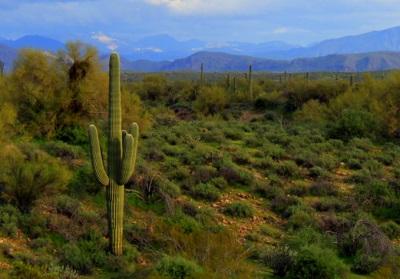 Phoenix Amish Arizona