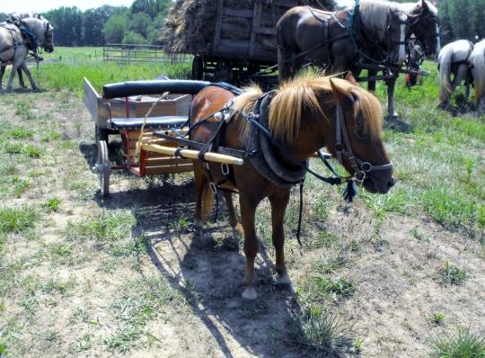 Pony Water Cart