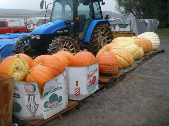 pumpkins-auction-snyder-co-pa