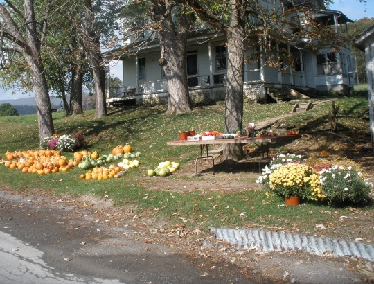 pumpkins-on-lawn