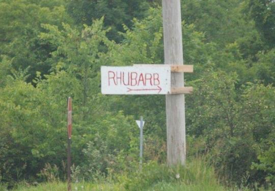 rhubarb-for-sale