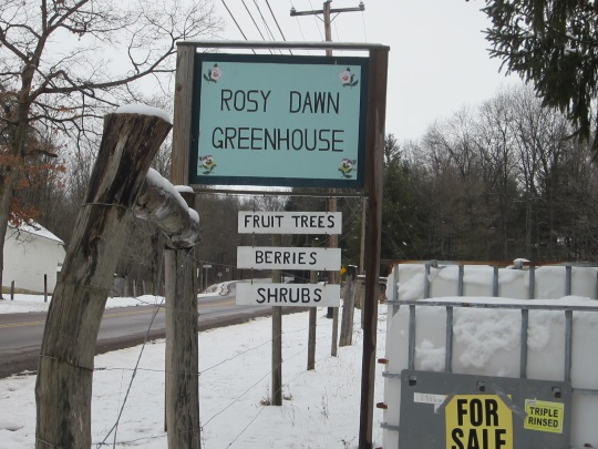 rosy-dawn-greenhouse