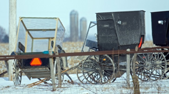screened-amish-buggy