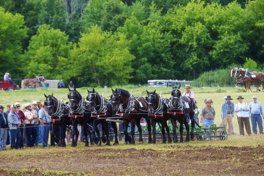 six-horses-percheron
