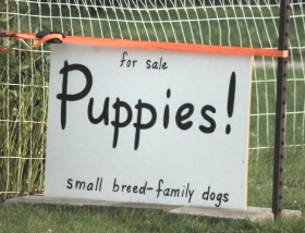 small-breed-dogs-sign