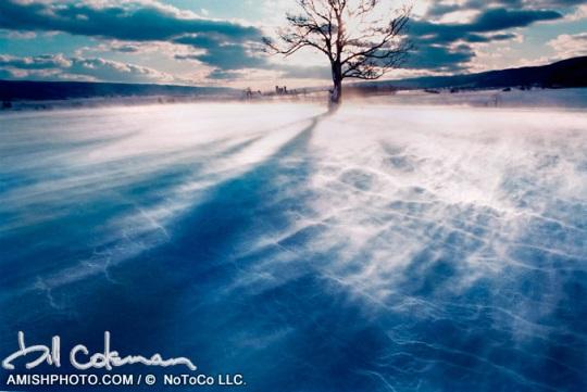 Snowswept