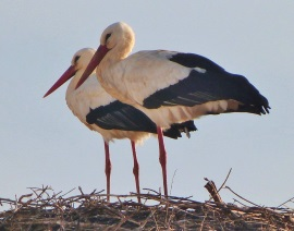 Stork Parents