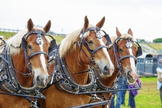 three-horses-horse-progress