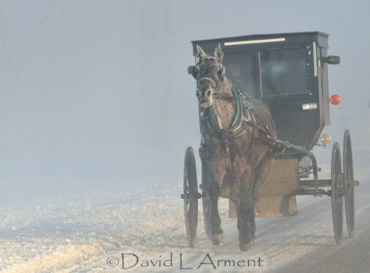 very-cold-buggy-arment-photo