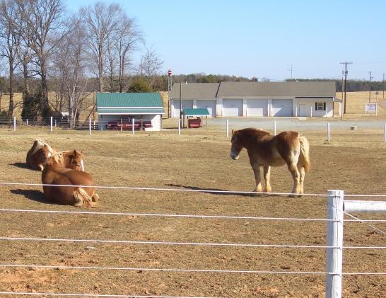 virginia amish horses