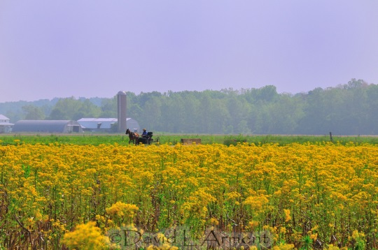 yellow-field-arment-photo