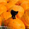 Bill Coleman's Autumn Amish Photos