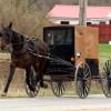 Levitating Amish horse?
