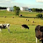 Amish Farms of Holmes County (18 Photos)