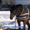 Indiana Amish Family Horse Killed In Drive-By Shooting