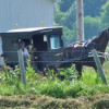 Amish Life In Shipshewana (Video)