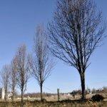 Five Trees Memorialize Nickel Mines Girls
