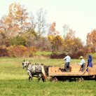 What's your favorite Amish community?