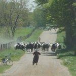 Caption contest: Cows