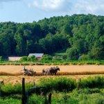 Photos From Western NY Amish Country