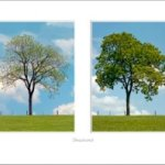 "Final Bill Coleman photo giveaway: ""Seasons"""