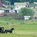A First Visit To Amish Ohio (24 Photos)