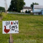 Food in Amish Country