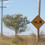 Someone Is Stealing Amish Buggy Signs (Delta County, Michigan)
