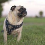 No Photos – at Holmes County dog auctions