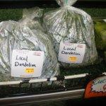 Dandelion Greens In Amish Cuisine
