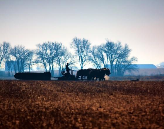 Illinois Amish Farmer