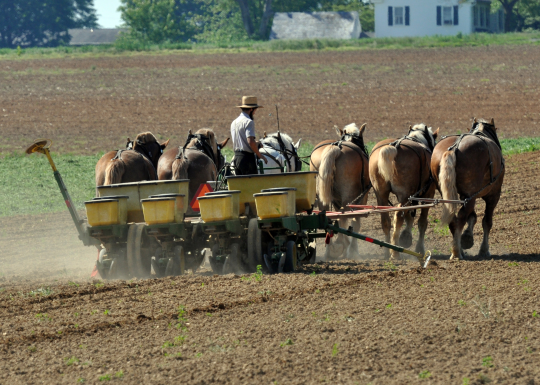 amish agriculture